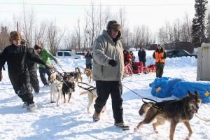 Iditarod volunteers at the Galena checkpoint move the sled dogs to their resting area on Alexander Lake next to the community hall. Photo by Chloe Tinker.