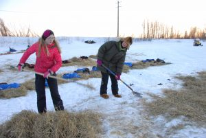 Galena high school student Shandeigh Roller (left) was one of the volunteers at the Iditarod helping maintain the area for the mushers.